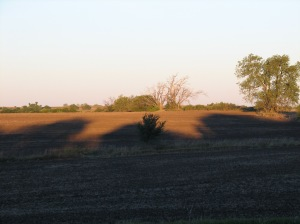 Sunrise Shadows in Flint Hills