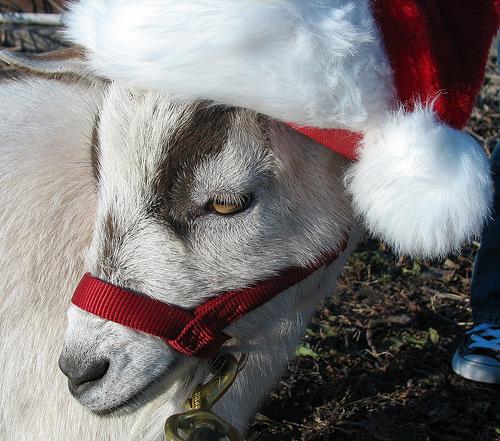 goat_christmas